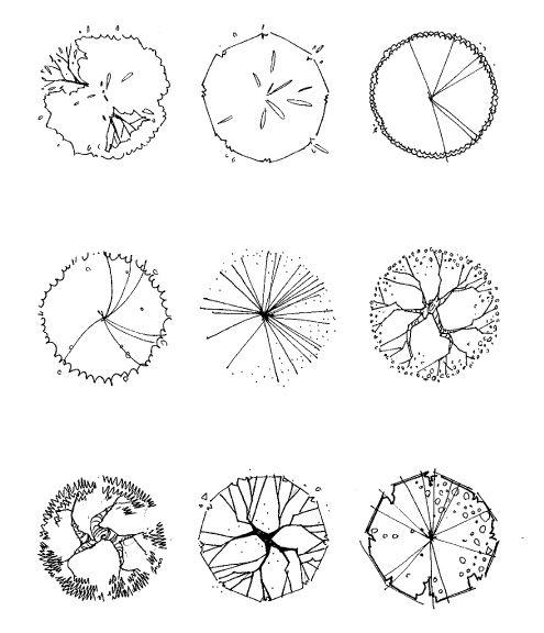 Tree Symbol Plan2 Sketches Pinterest Trees