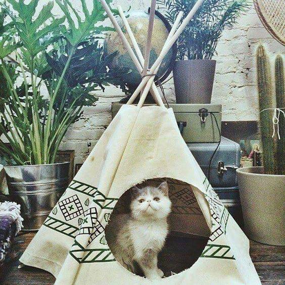 ☮ American Hippie Bohéme Boho Lifestyle ☮ Cat Teepee :)