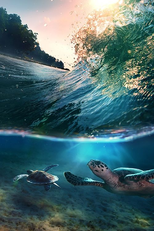 Tropical paradise with turtles: