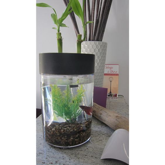 Indoor herb garden betta fish tank aquaponics on etsy 49 for Fish tank herb garden
