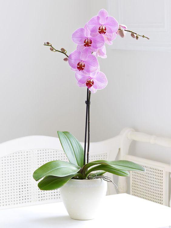 Pin De Elisangela Santana Em Decoracao Cultivo De Orquideas Flor De Jardinagem Orquidea