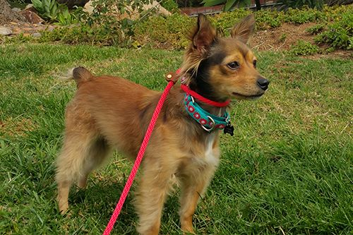Available Rescue Dogs Cats Adopt From Wagging Dog Rescue Dogs Rescue Dogs Dog Cat