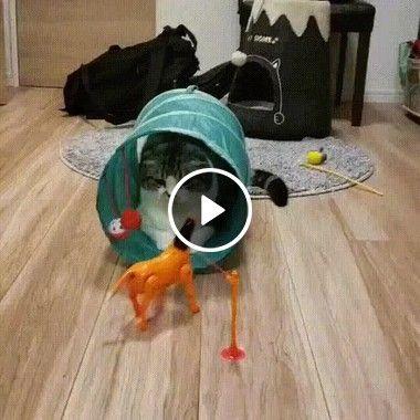 Distraindo um gato bagunceiro em casa