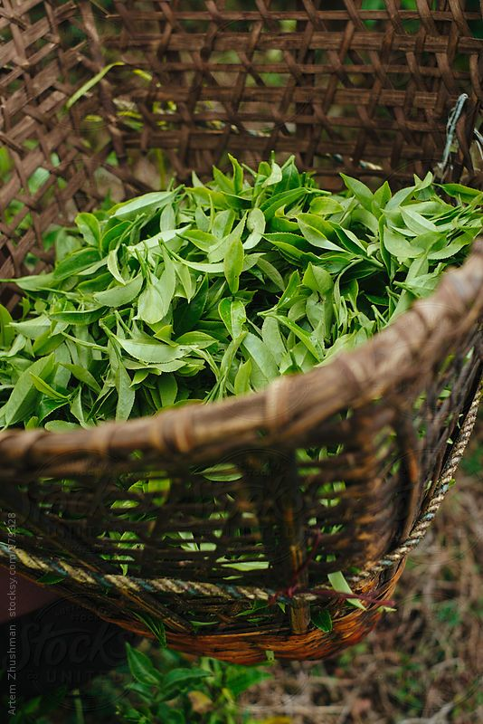 Tea leaves in wicker basket called Doko in Nepal
