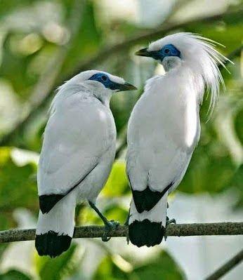 Les plus beaux oiseaux  3d42b36d9aea9409bf0127a6f38b8b15