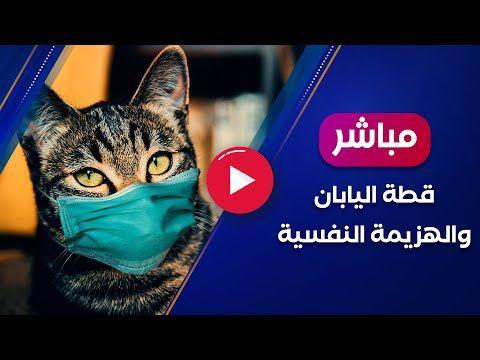 القطة اليابانية والهزيمة النفسية جواز سفر للقطة في اليابان Youtube Lockscreen