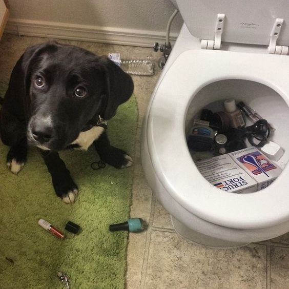 cachorros-arrependeram-amargamente-20
