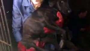 Cet homme a libéré et sauvé 1000 chiens du festival de la viande canine de Yulin en Chine ! - Dailymotion SA