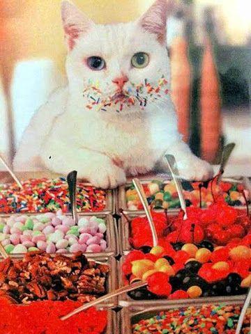 Eu nem gosto de doces! Kkkkk