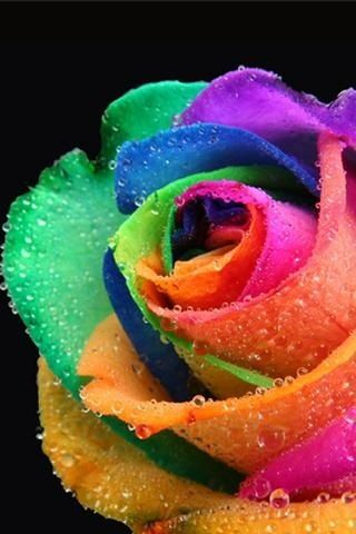 Rainbow rose nature pinterest ties i love and kind of for Rainbow dyed roses