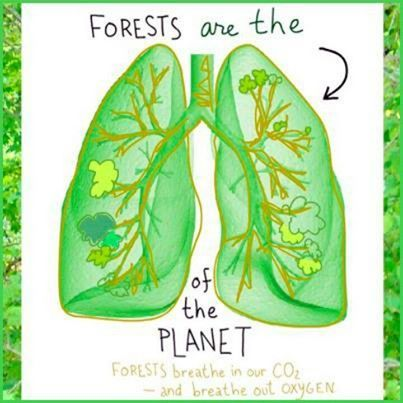 Forest SOS: Earth's green lungs disappear