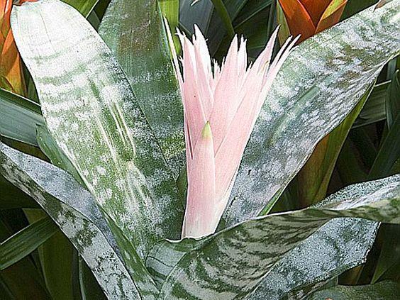Des plantes d 39 int rieur exotiques interieur et articles for Plante interieur exotique