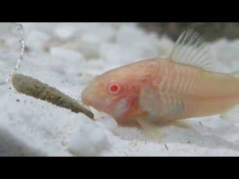 Easiest Fish To Care For In A Bowl Low Maintenance Pets Fish