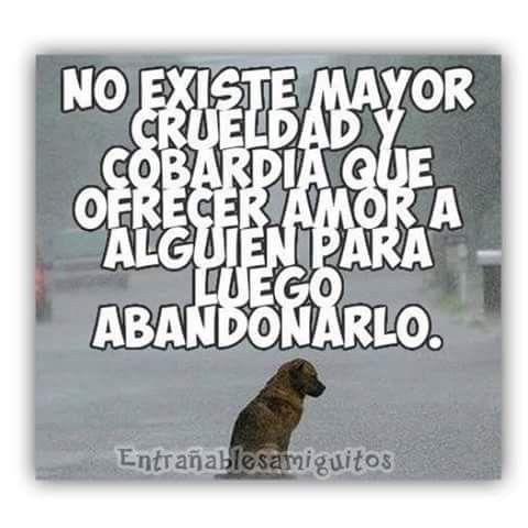 Pin De Marcia Alvarado En Amor A Las Mascotas Perros Frases Perros Abandonados Perros