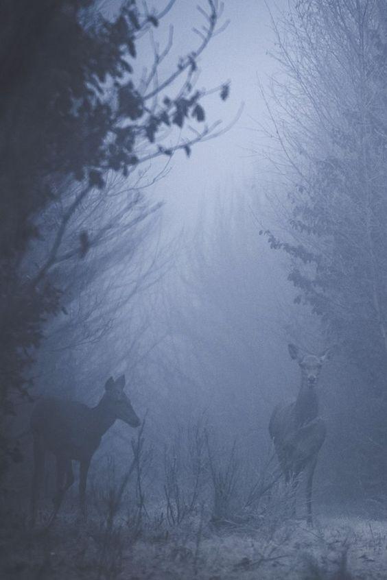 Un refugio entre la niebla [Celeste] 3d6db0c9bfbb6109d40dcd476733be14