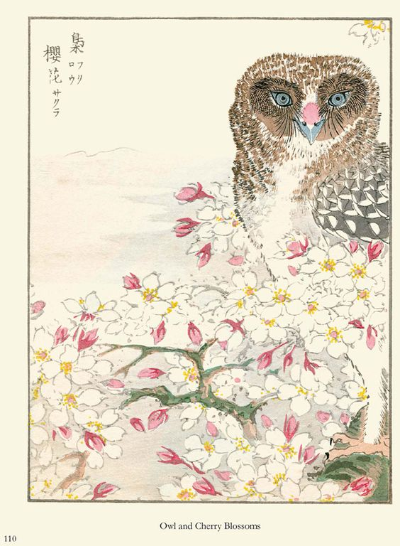 'Owl and Cherry Blossoms' from the book Japanese Woodblock Bird Prints by Numata Kashu @brenda