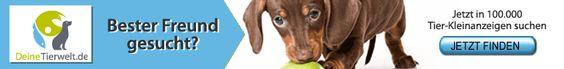 Züchteranzeigen, Tieranzeigen und mehr! Jetzt kostenlos inserieren : http://frankies-world.de/?p=2276 oder den besten Freund finden !