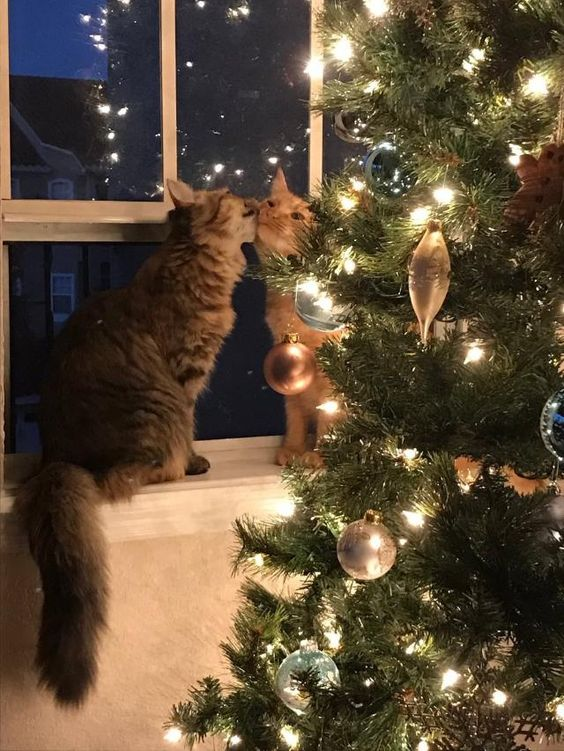 cats and christmas time by soyvirgo.com | Take Note
