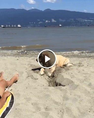 Cãozinho fazendo buraco na areia da praia