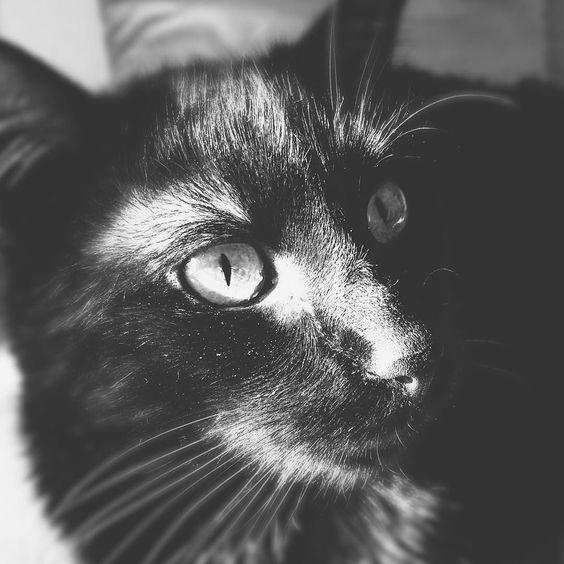 #cat #cats #TagsForLikes #catsagram #catstagram #instagood #kitten #kitty #kittens #pet #pets #animal #animals #petstagram #petsagram #photooftheday #catsofinstagram #ilovemycat #instagramcats #nature #catoftheday #lovecats #furry #sleeping #lovekittens #adorable #catlover #instacat by jakubcano