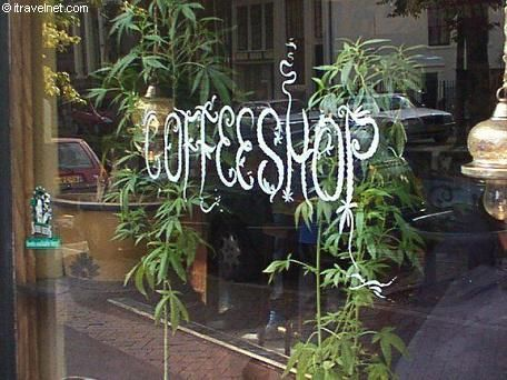 "Lifestyle - This is not your average ""coffee shop"". Coffeeshops are establishments in Holland where you can buy and smoke cannabis. This is tolerated by the Dutch authorities. Under the drug policy of the Netherlands, the sale of cannabis products in small quantities is allowed by 'licensed' coffee shops. The majority of these coffeeshops also serve drinks and food.:"