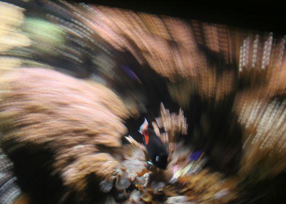 http://www.simonedurantephotography.com/border_galleries/underwater/