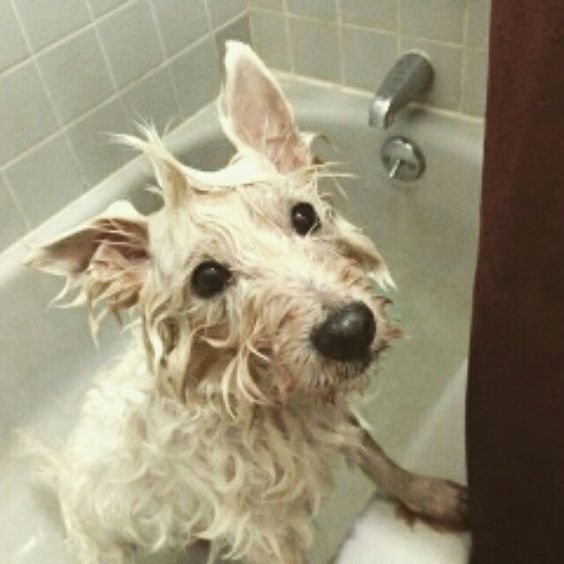 Haru loves Bath time