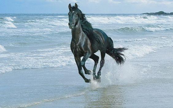 лошадь, волны, скорость