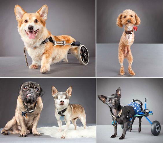 Pets with disabilities: Carli Davidson