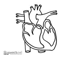 Human Heart Coloring Pages - coloring page of human heart