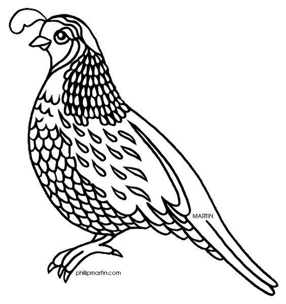 Ad0bdcb43da6231ecc1e5350cf81f69d Jpg 564 600 Bird Drawings Quail Bird Coloring Pages