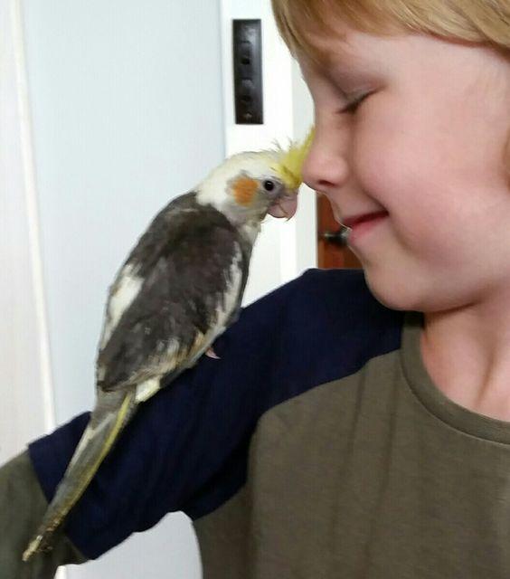 Mason & his feathered Cockatiel friend
