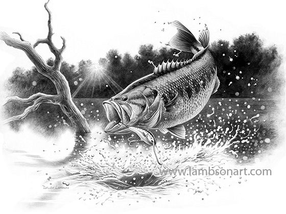 Gallery For gt Pencil Drawings Of Bass Fish