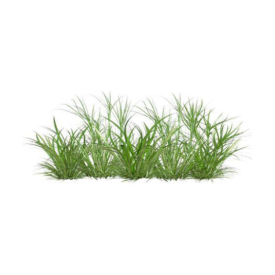 Grass liked on polyvore blocos pinterest for Grass flower