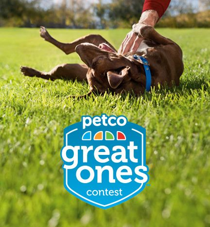 Deadline, September 30th 2013 50,000 to you and 50,000 to a Rescue of your choice! If you think you are a great pet parent & can show it Video or Essay. https://www.facebook.com/PETCO/app_334542513323993