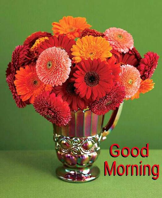 Good Morning Pictures 2018 In Hindi Punjabi English Whatsapp Images Good Morning Flowers Sweet Good Morning Images Daisy Centerpieces