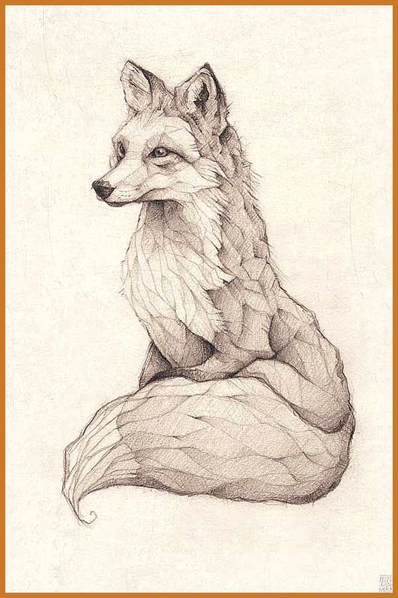 Vulpes Vulpes Pencil Drawing Illustration Art Retro Vintage Old Fox Red Fox Vulpes Animal Abstract Red Fox Tattoo In 2020 Kresleni Zvirat Ilustrace Roztomila Zviratka