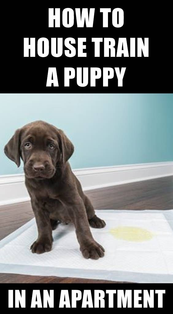 Potty Training Your Dog Although It Is Easy To Housetrain A Dog Things Will Go Wrong With This P House Training Puppies Puppy Toilet Training House Training