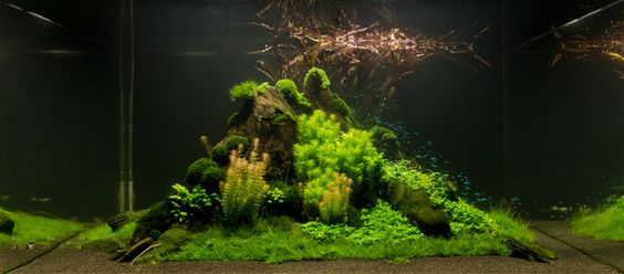 ... tropical nature fish tanks aquarium tanks plants fish aquascaping