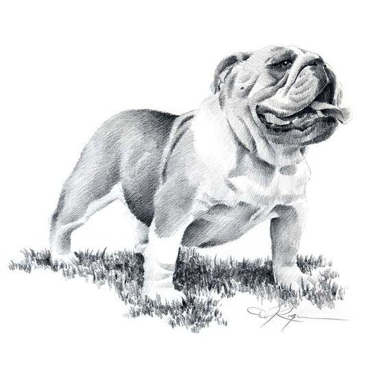 BULLDOG Art Print- DJ Rogers
