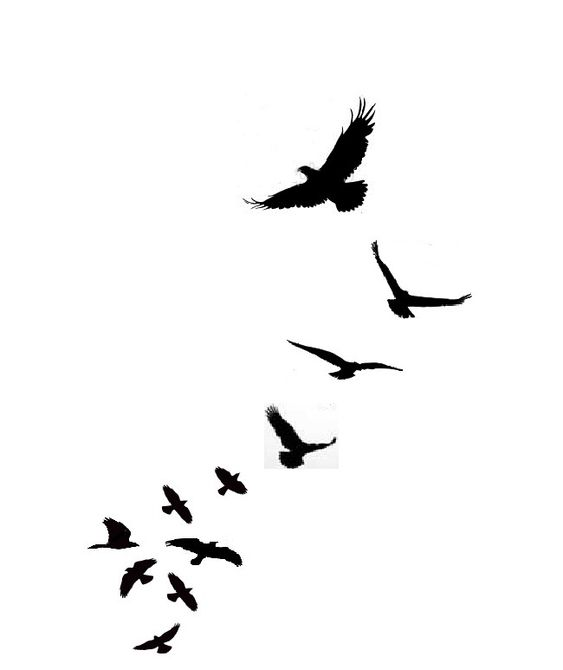 Star Bird Tattoo By Firedownbelow On Deviantart Design 752x1063 Pixel