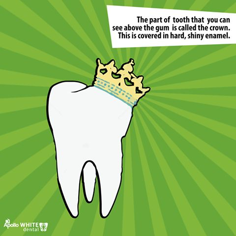The enamel forms a strong barrier that shields the inner layers of your teeth from the effects of acids and plaque. It also protects the sensitive inner layers of your teeth from foods and beverages that are very hot or very cold. Protect your enamel by following a regular oral hygiene regime.#ApolloWhiteDental #Chennai #Dental #teeth #ToothAche #Mumbai #Bangalore #Dentist #DentalClinic #RootCanal #TeethWhitening #SmileCorrection #Smile #InstantSmile #dentures #DentalSpa #Wisdomtooth…