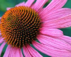bela-flor....