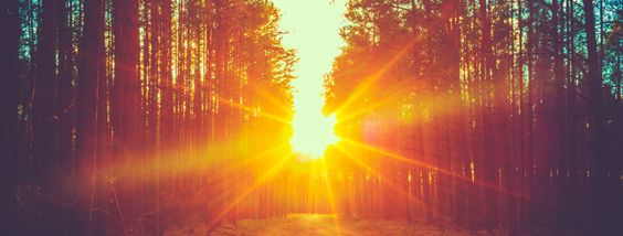 sunset forest_shutterstock_228722404