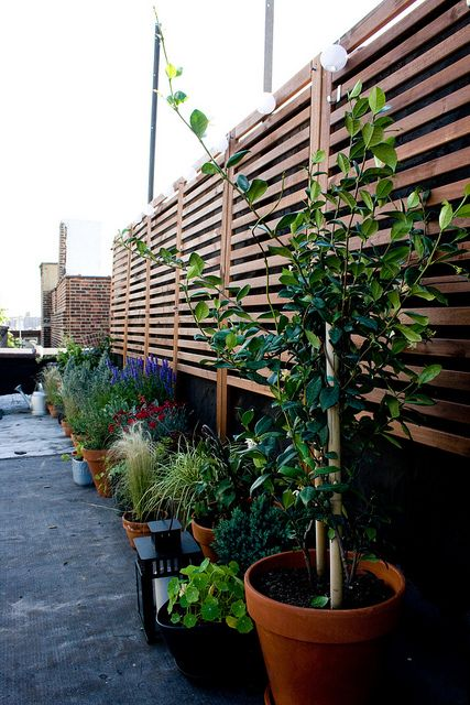 Gardens string lights and decks on pinterest for Outdoor deck privacy solutions