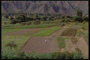 Comprar Tierras de Cultivo ¿Inversión del Siglo? | Bolsa Spain