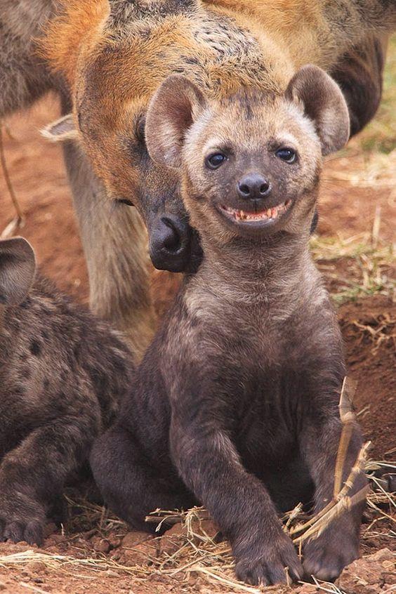 A prova que os animais sorriem