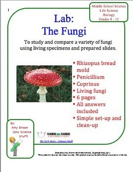fungus | Definition, Characteristics, Types, & Facts ...