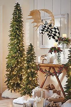 Trees Christmas Trees And Pine On Pinterest