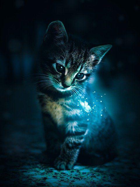 Free Image On Pixabay Cat Cat S Eye Cool Face In 2021 Cute Animal Photos Tiger Spirit Animal Kitten Wallpaper